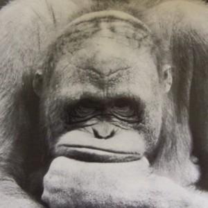orangutan_blog