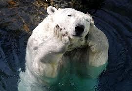 bored-polarbear